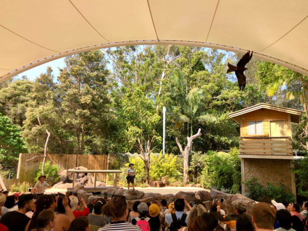 オーストラリア,カランビン,カランビンワイルドライフサンクチュアリ,動物園,ゴールドコースト,コアラ,抱っこ,写真
